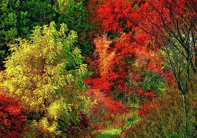 Autumn Photograph - Desire by Steve Harrington