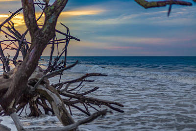 Driftwood At Botany Bay At Sunrise Print by Gestalt Imagery