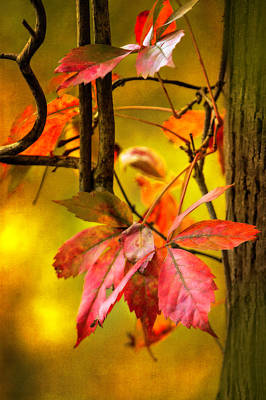 Fall Colors Original by Eduard Moldoveanu