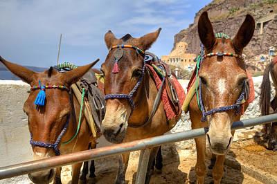 Donkey Photograph - Fira - Santorini by Joana Kruse