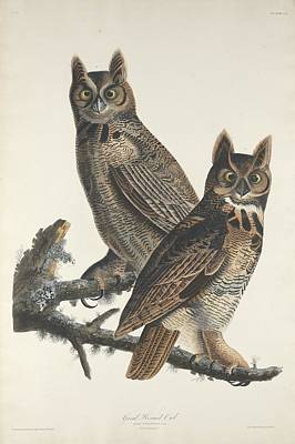 Owl Drawing - Great Horned Owl by John James Audubon