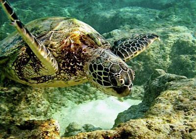 Hawaiian Honu Photograph - Green Sea Turtle by Michael Peychich