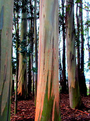 Photograph - Gum Trees  by Joyce Woodhouse