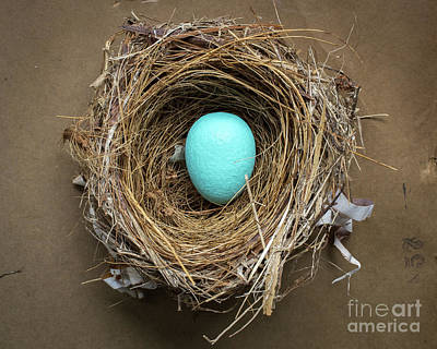 Pine Needles Photograph - Home Sweet Home by Edward Fielding
