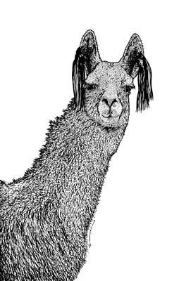 Llama Drawing - Llama by Karl Addison
