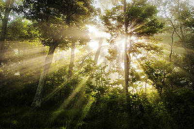 Light Photograph - Morning Rays by Andrew Soundarajan