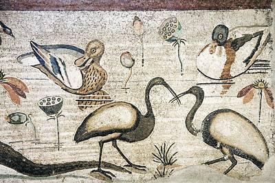 Ibis Photograph - Nile Flora And Fauna, Roman Mosaic by Sheila Terry