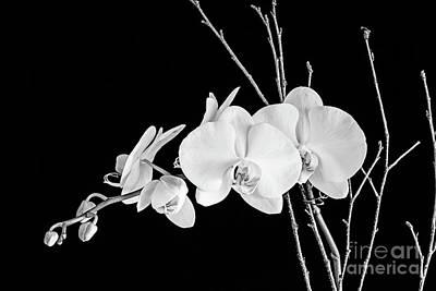 Orchid Print by Scott Pellegrin