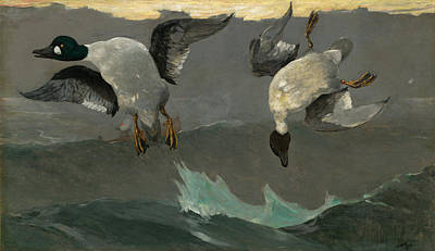 Duck Painting - Right And Left by Winslow Homer