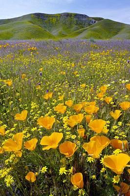 Luis Photograph - Shell Creek, California by Bob Gibbons