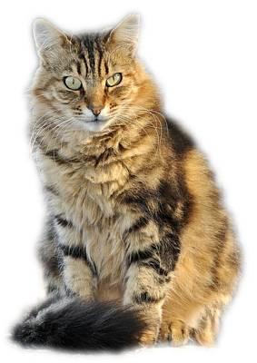 Portrait Photograph - Sitting Cat by George Atsametakis