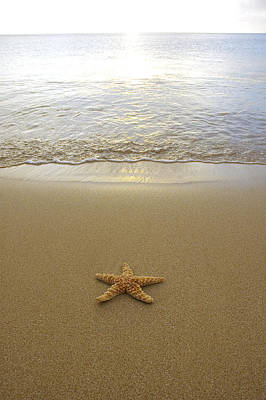 Sea Creatures Photograph - Starfish On Beach by Mary Van de Ven - Printscapes