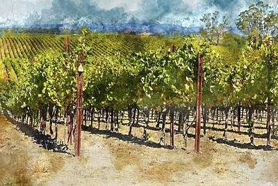 Vineyard In Napa Valley California Print by Brandon Bourdages