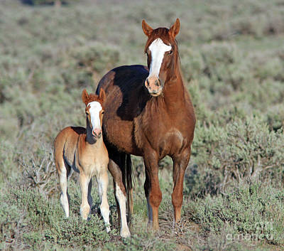 Photograph - Wild Horse by Gary Wing