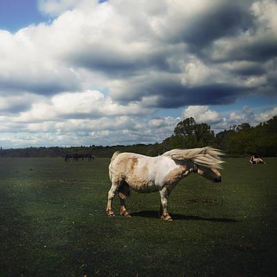 Shetland Pony Photograph - Windy Day by Joana Kruse