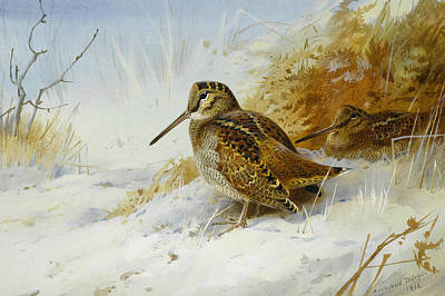 Woodcock Painting - Winter Woodcock by Archibald Thorburn