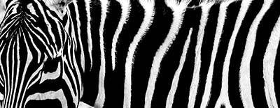 Zebra Photograph - Zebra Stripes by Martin Newman