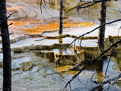 Yellowstone Print by Tara Lynn