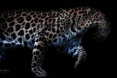 Leopards Photograph - Amur Leopard by Martin Newman