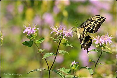 Butterfly Photograph - Butterfly by John Ohm