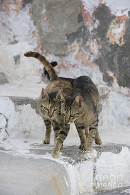 Gray Tabby Photograph - Cat And Her Kitten by Jean-Louis Klein & Marie-Luce Hubert