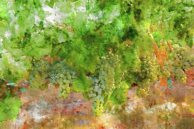 Napa Valley Painting - Chardonnay Grapes Close Up by Brandon Bourdages