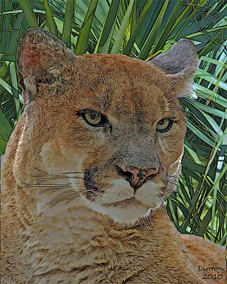 Panther Digital Art - Florida Panther by Larry Linton