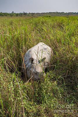 Indian Rhinoceros, India Print by B. G. Thomson