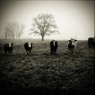 Pasture Scenes Photograph - Livestock by Les Cunliffe