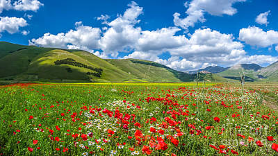 Flowers Photograph - Piano Grande Summer Landscape, Umbria, Italy by JR Photography