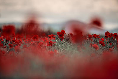 Corn Field Photograph - Summer Poppy Meadow by Nailia Schwarz