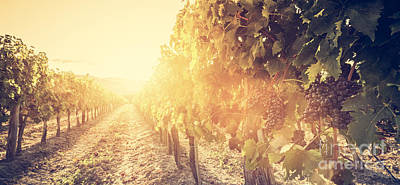 Grapes Photograph - Vineyard In Tuscany, Italy by Michal Bednarek