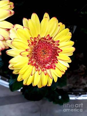 Yellow Flower  Print by Joyce Woodhouse