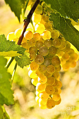White Grape Photograph - Yellow Grapes by Elena Elisseeva
