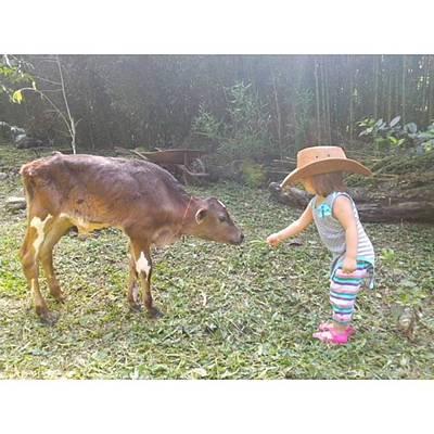 Cow Photograph - Cowgirl by David Cardona
