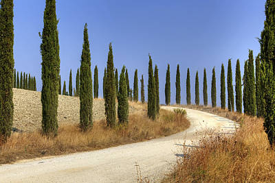 Cypress Trees Photograph - Tuscany by Joana Kruse