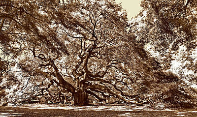 Frogs Photograph - Angel Oak by Skip Willits
