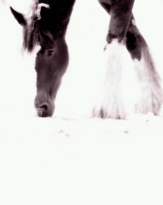 Candid Mixed Media - Horse by Frances Lewis