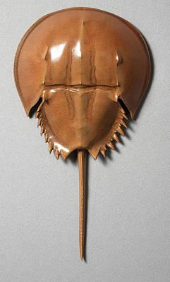 Ceramic Crab Ceramic Art - Horseshoe Crab by Mark Rea