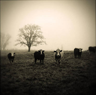 Bull Photograph - Livestock by Les Cunliffe