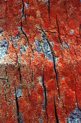 Tropical Climate Photograph - Tree Bark by John Foxx