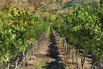 Wine Photograph - Vineyard In Napa Valley California by Brandon Bourdages