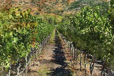 Vineyard In Napa Valley California Print by Brandon Bourdages