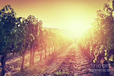 Rural Photograph - Vineyard Landscape In Tuscany, Italy. Wine Farm At Sunset by Michal Bednarek