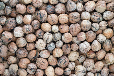 Shell Sign Photograph - Walnuts by Michal Boubin