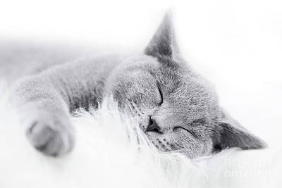 Smiling Photograph - Young Cute Cat Resting On White Fur by Michal Bednarek