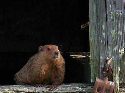 Groundhog Digital Art - 5003-groundhog by Martha Abell