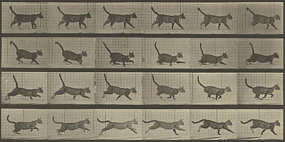 Cat Photograph - Animal Locomotion by Eadweard J Muybridge