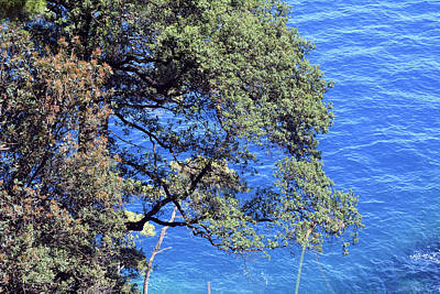 Park Portofino Italy Photograph - Beautiful Natural Landscape With Threes And The Sea In Portofino, Italy by Oana Unciuleanu