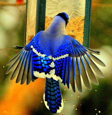 Eagls Digital Art - Blue Jay by Aron Chervin